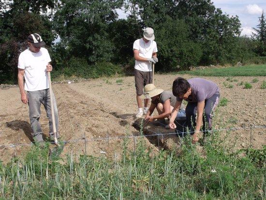 Plantation et entretien de la safranière