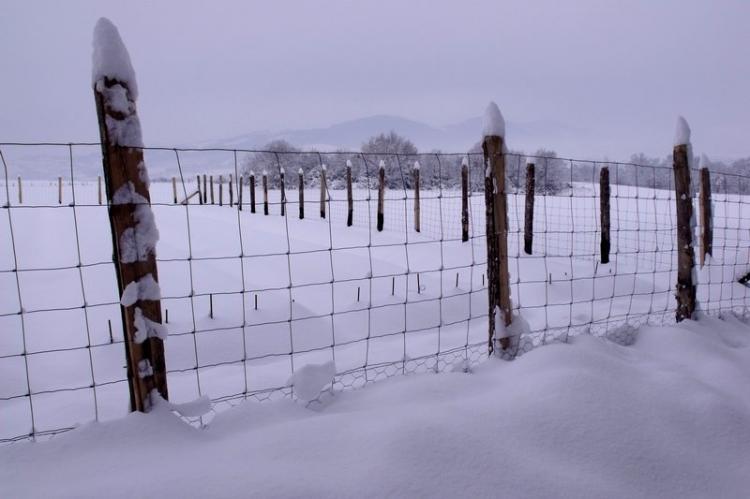 safran-sous-la-neige.jpg